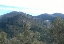 Bayındır Dağ Zeytinyağının Özellikleri