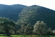 Zeytin Ağacı Bakım Yöntemleri