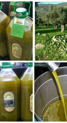 Yeşil Sıkım Zeytinyağı